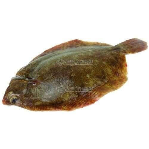 Tongschar filet